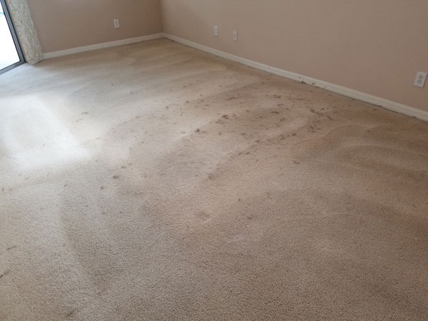 Carpet Before Grooming of Cat Hair